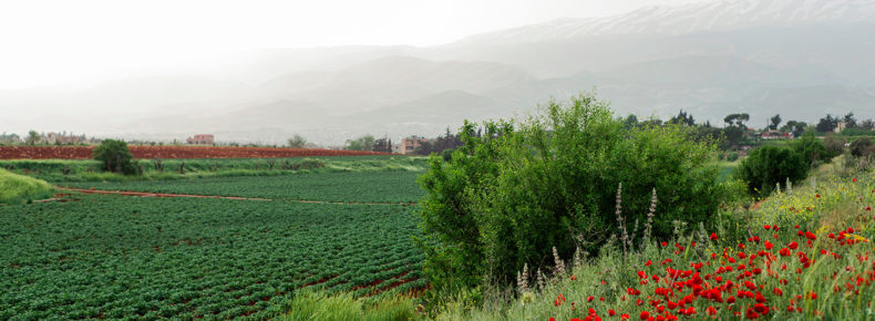 Agritourism and ecotourism in Lebanon