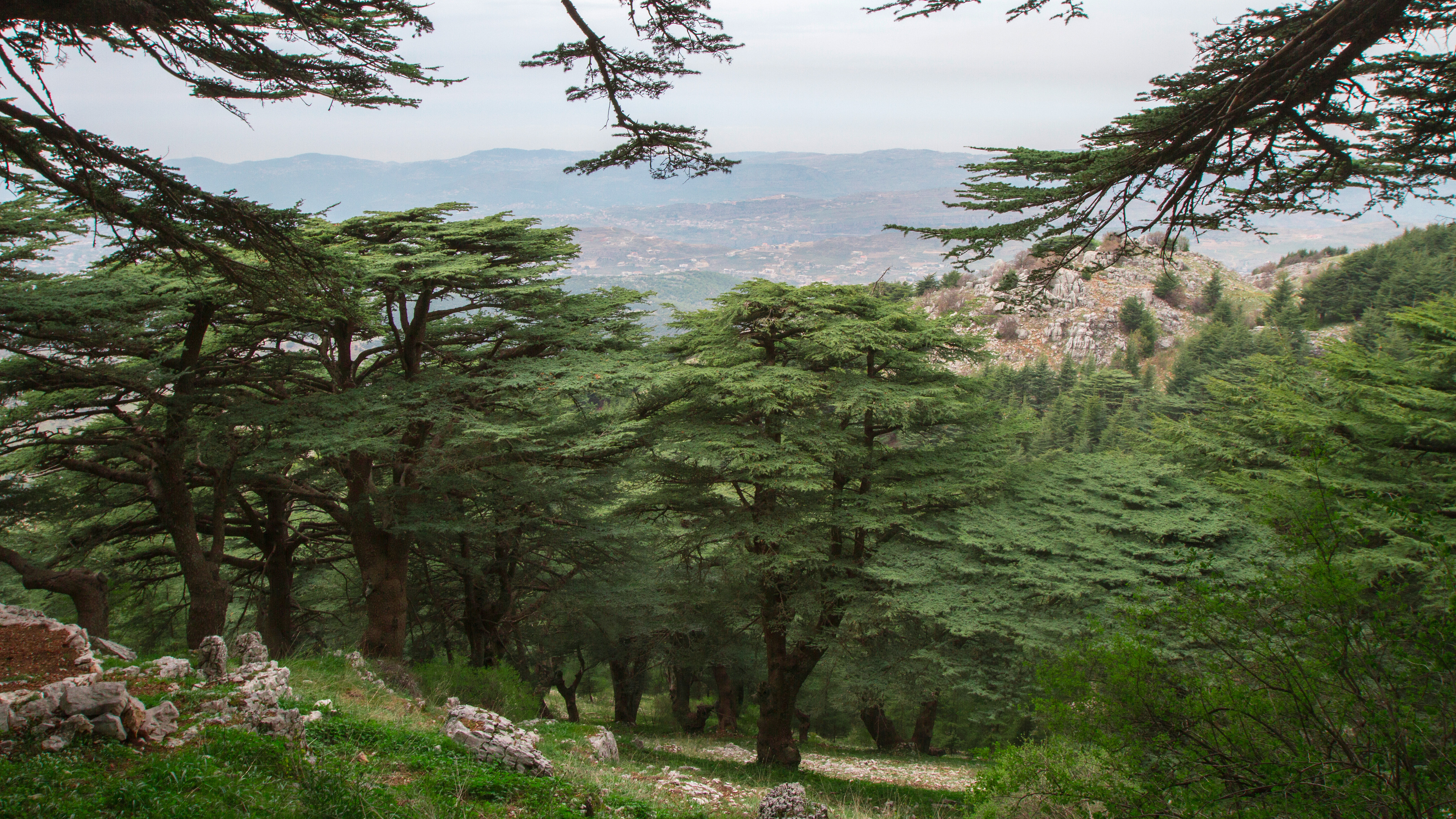 Chouf Cedar Reserve - Maasser Forest